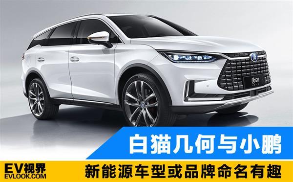 白猫几何小鹏比亚迪王朝 新能源车型或品牌命名如此有趣