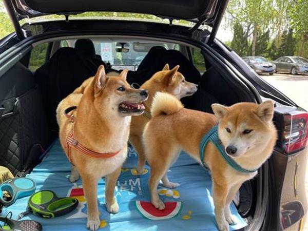"""1辆车2个人3只柴,特斯拉""""无感充电""""之旅"""